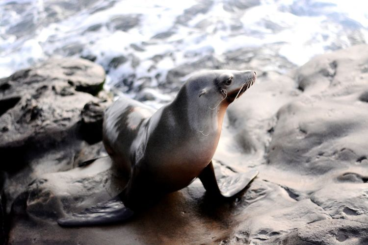 High angle view of sea lion at shore