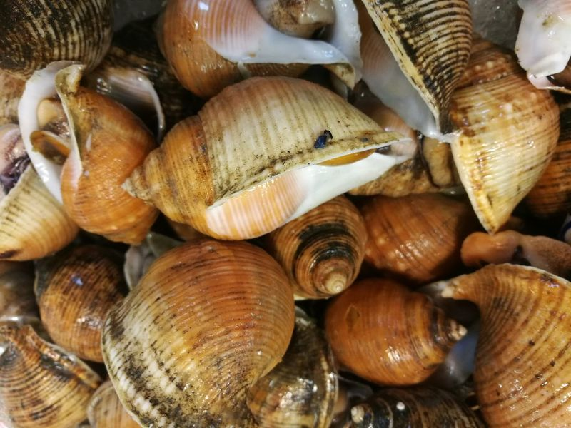 sea snails Abbundance, Babylon Close-up Day Delicious Food Food And Drink Fresh Freshness Freshness Healthy Eating Indoors  Market Nature No People Seafood SHELLFISH  Snails Snailshell