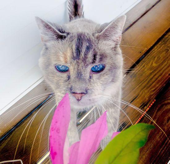 Petals Cat