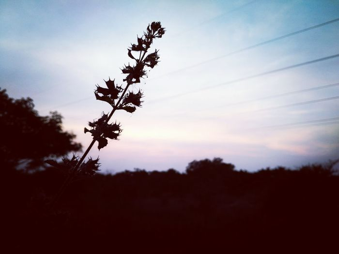 Sunset Silhouette Nature Dramatic Sky Beauty In Nature No People Sky Outdoors Nature Photography Plant EyeEm Mobile Photography EyeEm Nature Lover Mobile Photography Eyeem Mobilephotography