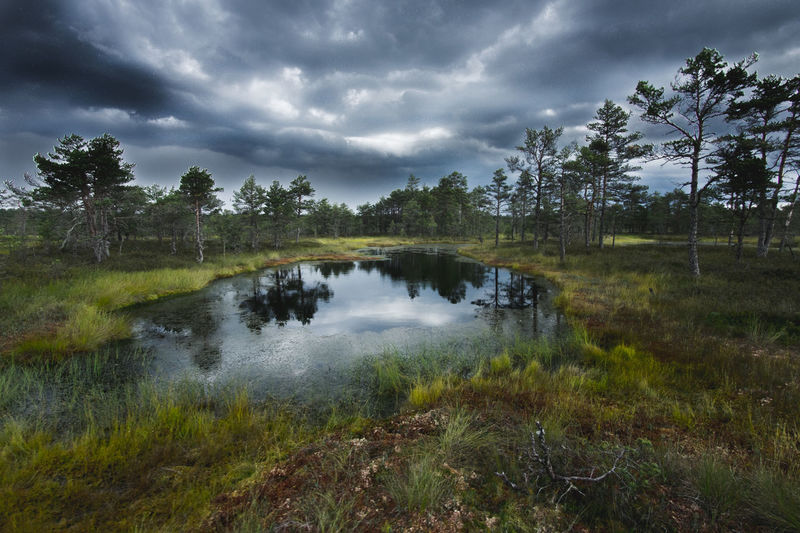 Estonia Bog Beauty In Nature Bog Calm Countryside Estonia Lake Lakeshore Majestic Mirkomacarilandscape Outdoors Reflection Remote River Riverbank Scenics Standing Water Tranquil Scene Tranquility Travel Tree Water Waterfront