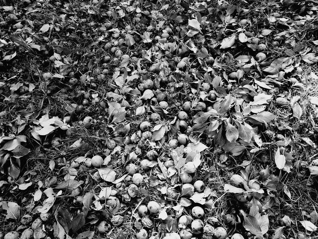 Growth Abundance Beauty In Nature No People Outdoors Low Angle View Prunes Black & White Black And White Photography