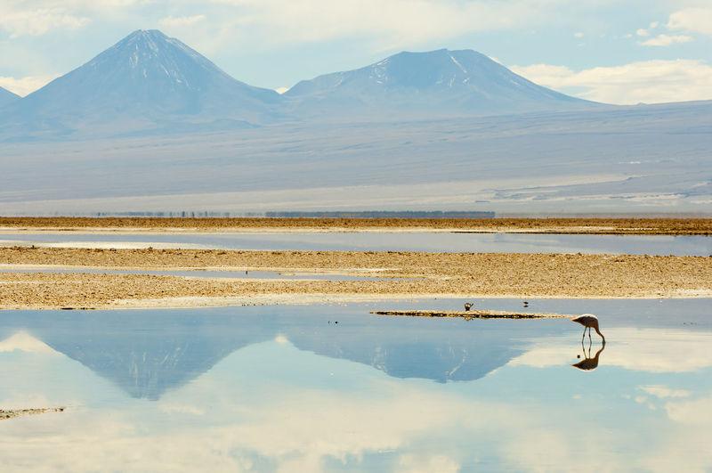Chaxa Lagoon Chile Desert Flamingo Atacama Chaxa