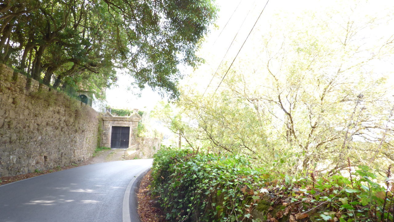 tree, road, no people, the way forward, transportation, architecture, day, built structure, plant, nature, outdoors