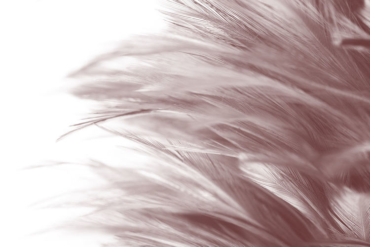 Feather  Softness Close-up Selective Focus Nature No People Lightweight Vulnerability  Fragility White Color Hair Outdoors Full Frame Day Backgrounds Macro Beauty In Nature Fluffy Studio Shot Pattern Wind Soft Focus