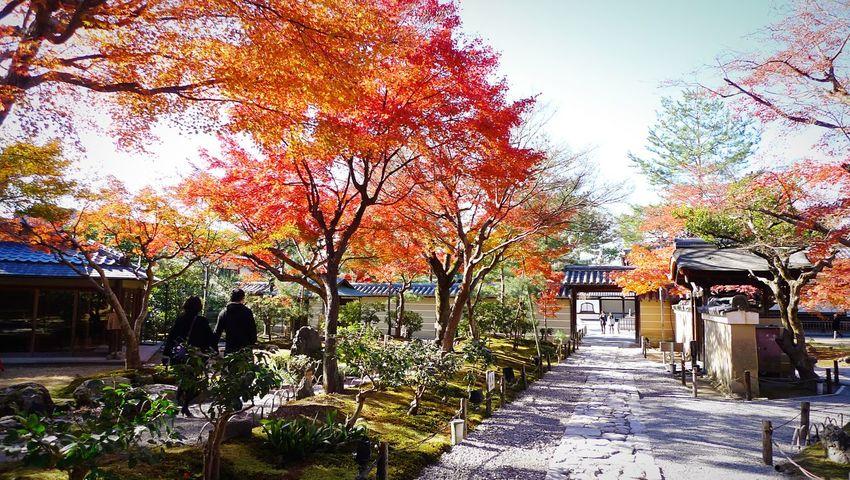 高台寺 京都 東山 Kyoto, Japan Kyoto Autumn 2015  Autumn Travel Destinations Enjoying Life Hello World Autumn Colors Japanese Garden Relaxing