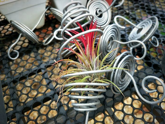 Airplant Flower Airplantlovers Tillandsia Plants Plants 🌱 Airplane Airplant Flower Tillandsia Metal Close-up
