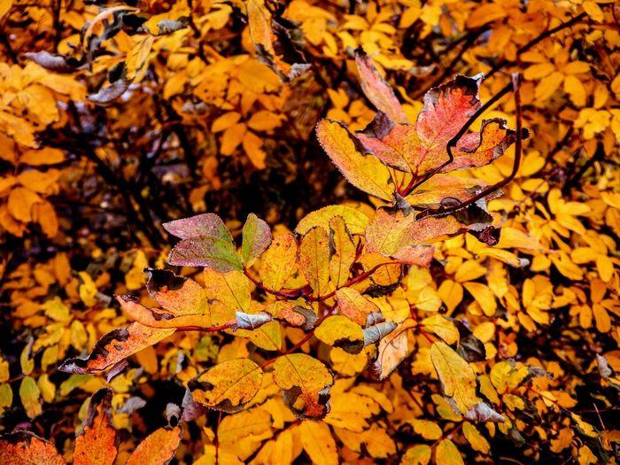 Fall,autumn