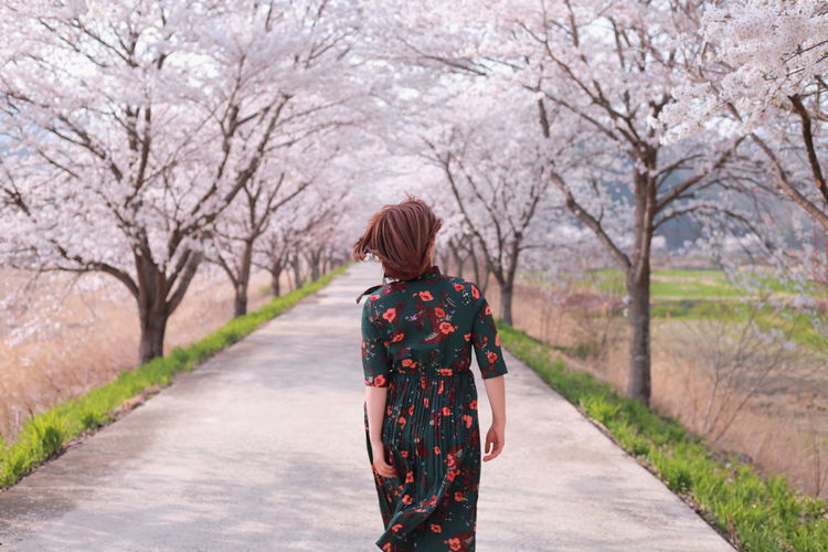Rear View Of Woman Walking On Footpath Amidst Cherry Trees