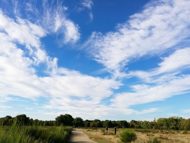 Cloud - Sky Cloud Cloudporn Clouds And Sky Wahnerheide Wahner Heide Nature Beauty In Nature Tree Outdoors Sky