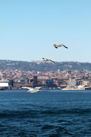 Flying Bird Animals In The Wild Animal Wildlife Outdoors No People Day Sea Nature Animal Themes Cityscape City Urban Skyline Sky Architecture Spread Wings Napoli Naples Italy Italia Boating Boat Island Mediterranean  Mare EyeEmNewHere EyeEm Selects