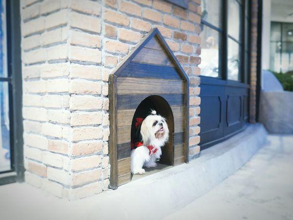 Mydog♡ Shihtzu Minimouse Redhood Snow Snowwhite Dog Pets