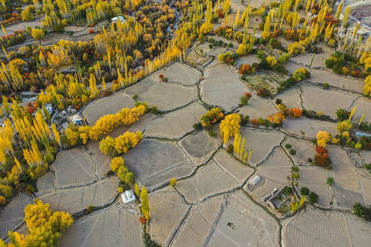 High angle view of yellow flowering plants by road