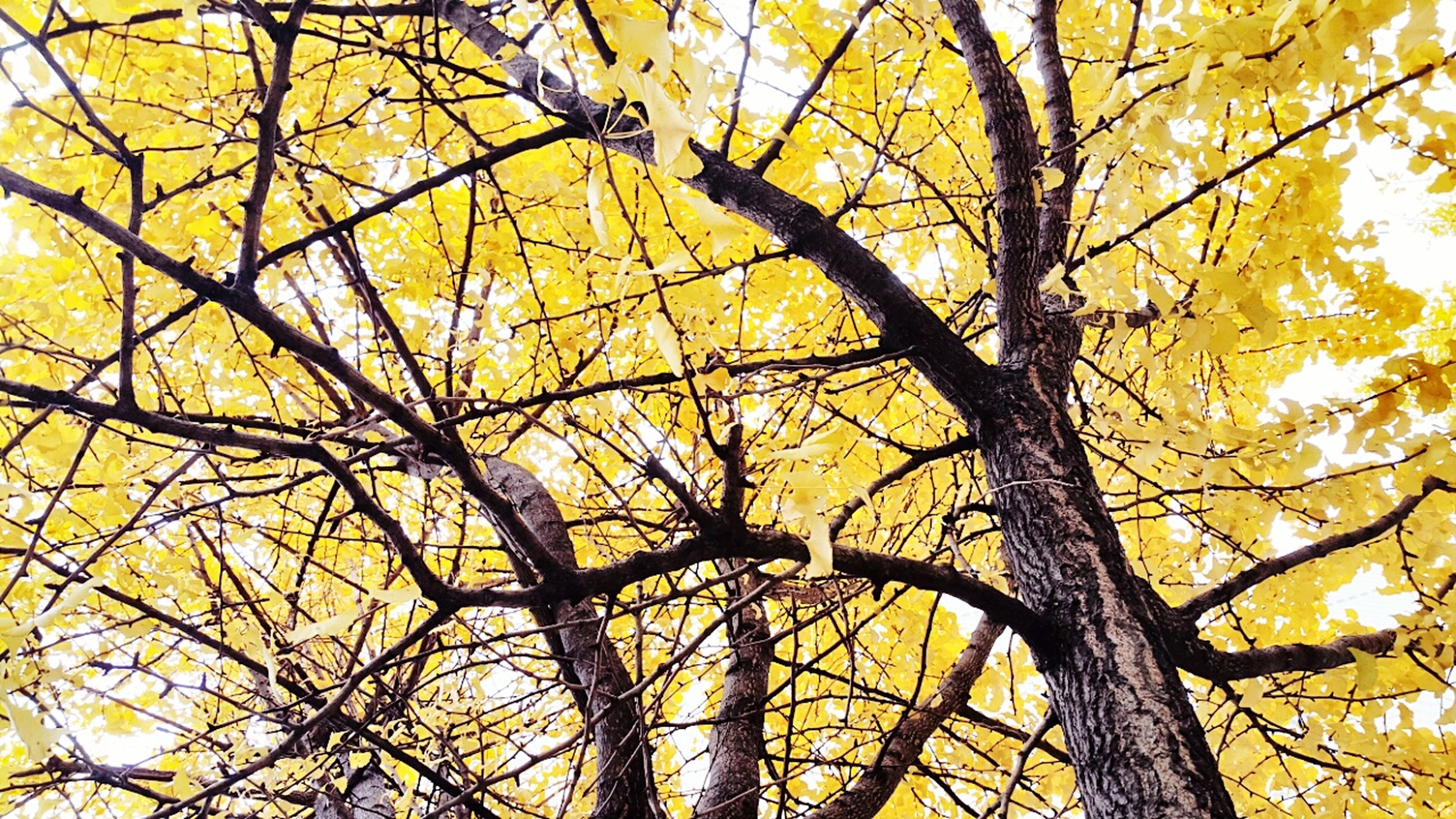 tree, branch, yellow, low angle view, autumn, change, nature, growth, beauty in nature, season, tree trunk, orange color, sky, tranquility, outdoors, full frame, no people, backgrounds, day, leaf