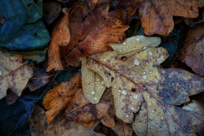 waiting for winter... Autumn Low Key Nature Full Frame Beauty In Nature Leaf Close-up Waterdrops Water Droplets Dreamy Forest Texture Textures And Surfaces Cold North Sweden A7RII Nature