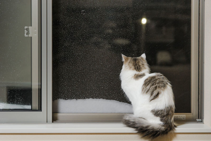 Cat sitting by window looking at snow