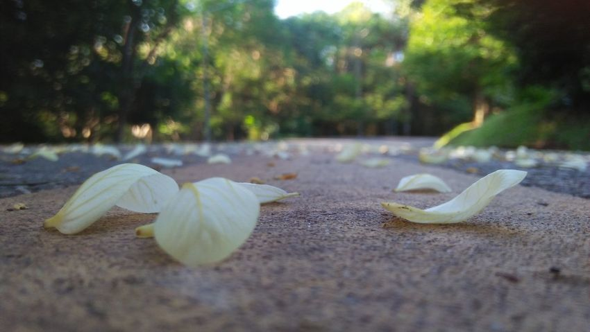 Leaf Nature Autumn Outdoors No People Close-up Fragility Day Plant Beauty In Nature Freshness Flower Head