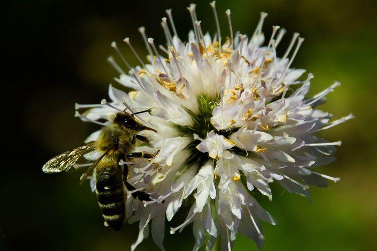 Bee Bee EyeEm
