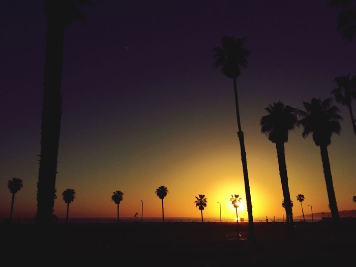Palm Tree Silhouette Sunset Beauty In Nature Nature Scenics Tranquil Scene No People Outdoors Dayandnight Night Venice Beach Beach