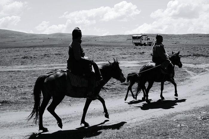 Black & White Black & White Photography Documentary Grassland Humanities Animal