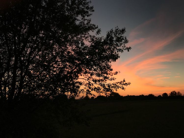 You can't beat a good sunset. EyeEmNewHere Tree Silhouette Sunset Nature Beauty In Nature