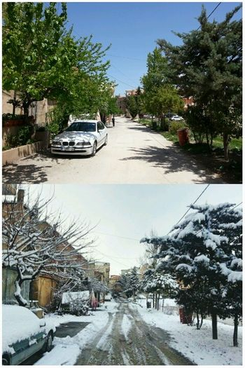 hi , I've taken these two shots from the same place , today and last winter BeforeAndAfter  Spring Winter College Landscape Amazing View Road On The Road