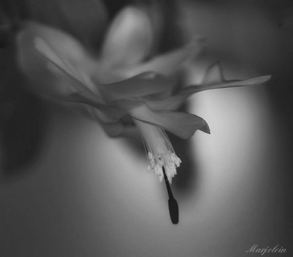 Nature No People Beauty In Nature Close-up Day Goodshot Editing Pictures EyeEmNewHere Edits_bnw Eye4photography  Indoors  Indoor Lighting EyeEm Gallery EyeEm Best Shots Bnw_of_our_world Black&white Monochrome Black And White Photography Scenics Plant Photography Fifty Shades Of Grey Moodyphotography