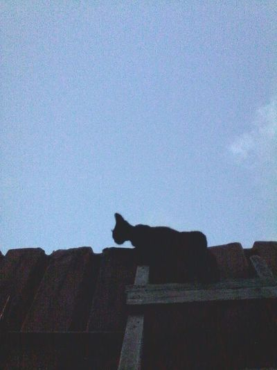 One Animal Domestic Cat Feline Cat No People Outdoors Ladder Fence Cats Of EyeEm Showcase: September Showcase: 2016 2016 Eyeemphoto Eyeem Market Ionitaveronica Wolfzuachis @wolfzuachis The Week Of Eyeem Silhouette Animals Cat Silhouette Cats Sky Animal Night