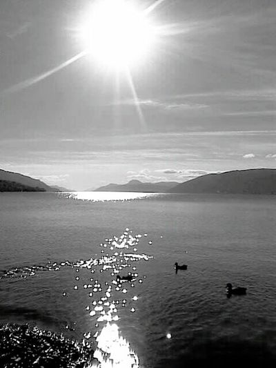 Lochness Loch Ness Black And White Collection  Scotland Ducks