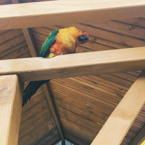 Animal Themes One Animal Parrot Animals In The Wild Bird Low Angle View No People Nature Outdoors Day Macaw Perching Beauty In Nature