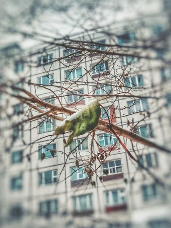 Animal Themes Bird One Animal Perching No People Branch Animals In The Wild Nature Day Animal Wildlife Outdoors Beauty In Nature Leaf Green Color Winter Trees