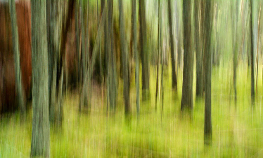 Forest in Dalarna, Sweden Abstract Abstract Photography Beauty In Nature Blur Blurred Motion Blurry Camera Movement Dalarna Dalecarlia Europe Forest Green Green Color Growth Landscape Nature No People Northern Europe Outdoors Plant Scandinavia Stem Sweden Tranquility Trees