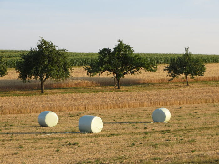 Agriculture Autumn Bale  Fall Farm Field Green Color Harvesting Hay Nature Rural Scene Tranquil Scene