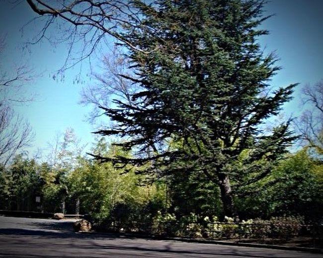Washington, D. C. Washington Zoo Trees TreePorn Big Tree Outdoors Nature
