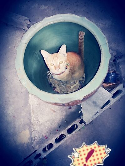 Take Photos I Love My Cat Cat♡ i miss you Pet Photography
