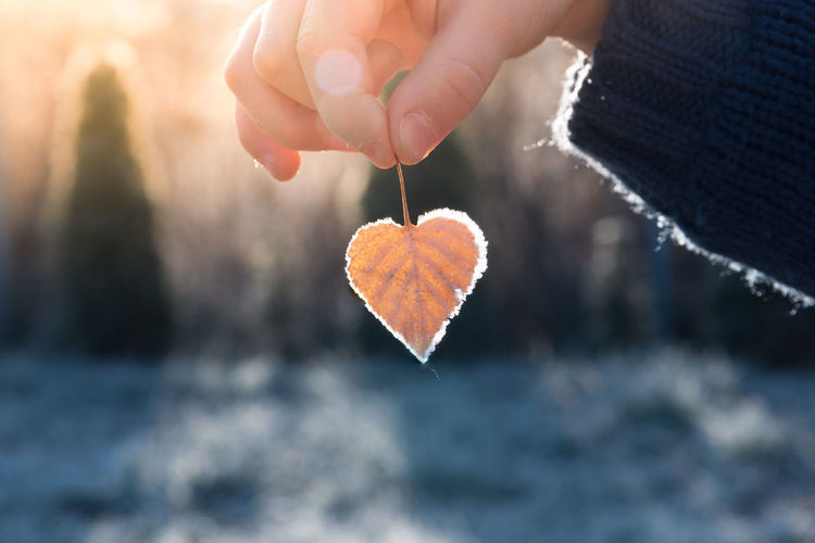 Child's hand holding a heart shaped leaf with a frost on its edges illuminated by warm light of setting sun Autumn Child Childhood Close-up Cold Temperature Day Heart Shape Holding Human Hand Leaf Nature One Person Outdoors Tree Winter Live For The Story Place Of Heart