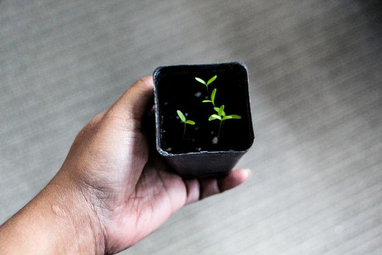 Seedling growing life