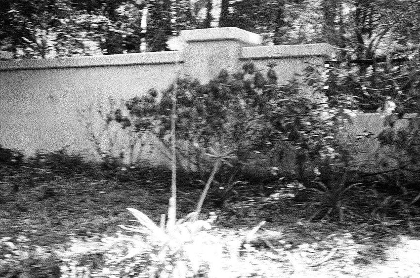 Wall No People Built Structure Entrance NATURA Classica Ilford Delta 3200 Koduckgirl Blknwht Carmel California Film Grainy Photo Tree