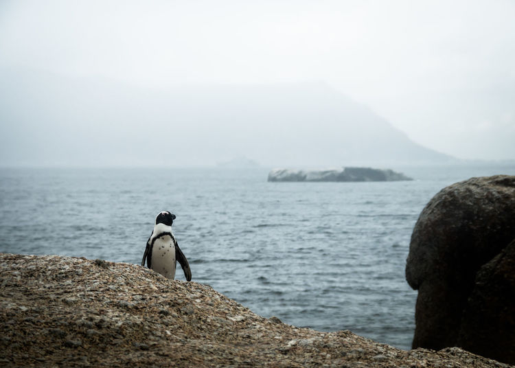 Penguin On Rock In Sea Against Sky