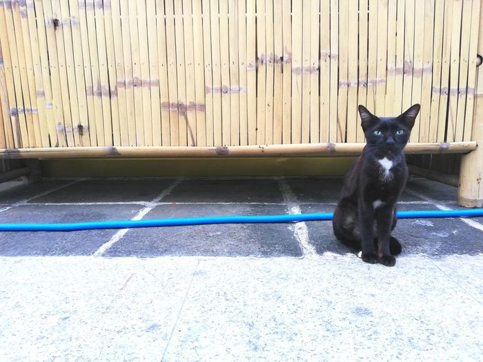 BLackCat Stray