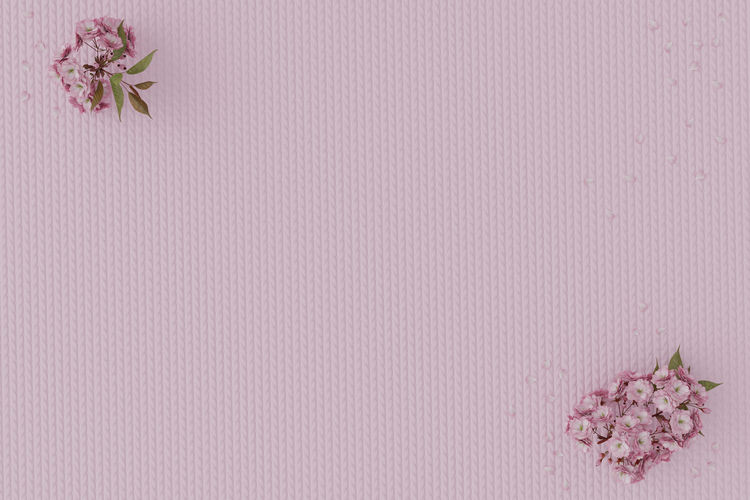 japanese cherry blossom laying on cotton fabric Copy Space Japanese  Japanese Cherry Blossom Cotton Fabric Beautiful Spring Card Flower Floral Petals Flower Arrangement Flower Head Pattern Freshness Fragility Vulnerability  Pink Color Petal Background Backdrop Pink