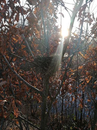 Sunlight Tree Nature Branch Bird Nests Low Angle View Outdoors
