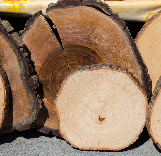 Close-up Cross Section Day Deforestation Forestry Industry Log Lumber Industry No People Outdoors Stack Timber Tree Ring Wood - Material