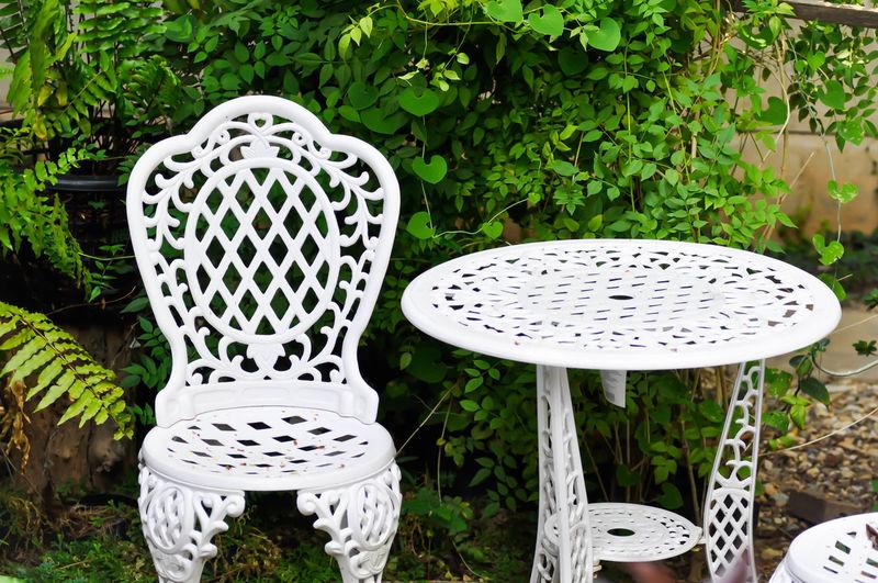 Chair Fern