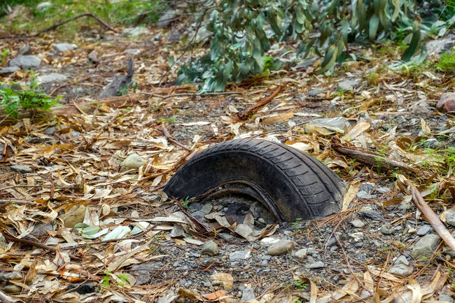 Old and ragged car tire dug in the ground Abandoned & Derelict Forgotten Old Tyres Abandoned Animal Themes Car Tyre Car Tyres Close-up Day Dug Field Ground High Angle View Leaf Nature No People Outdoors Plant Ragged