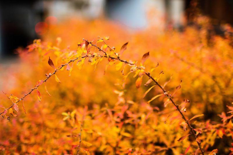 Orange Plants Growing On Field