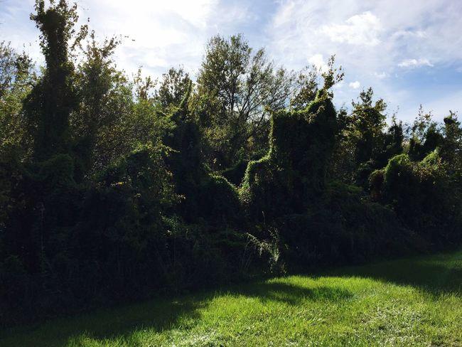Showcase: November Living Trees
