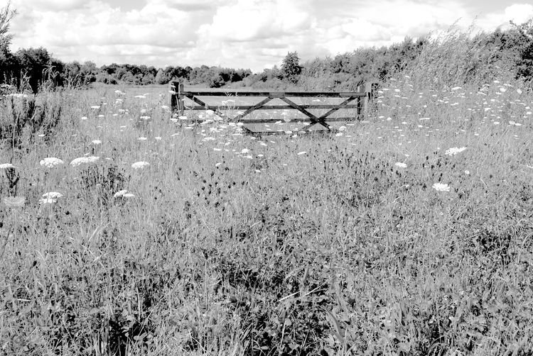 Beauty In Nature Black & White Cloud - Sky Fence Field Grass Landscape Nature