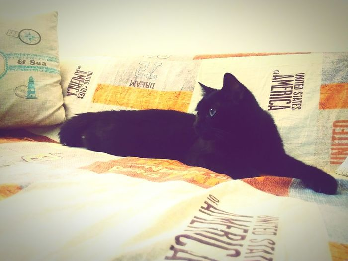 Otello Cat Catlifestyle Attention To Detail BLackCat Seriously Orange Color Lovelyfriend Standbyme