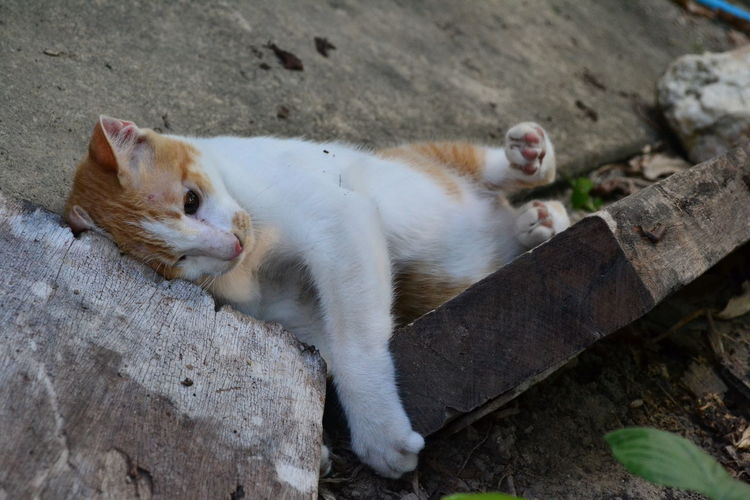Cat relaxing by wooden planks